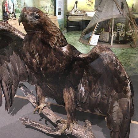 Akta Lakota Museum: photo8.jpg