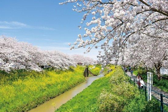 Toyoda River