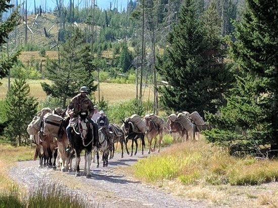 Lincoln, MT: The pack mule string returning to the trail head