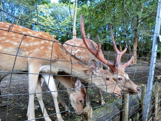 Abira Town Deers Park