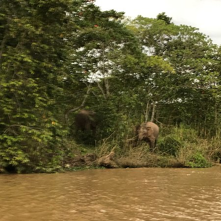 Abai Jungle Lodge: photo1.jpg
