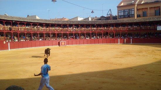 Plaza de Toros - Toro