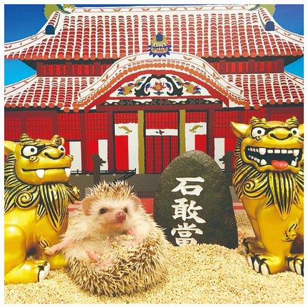Hedgehog Home & Cafe Okinawa Naha