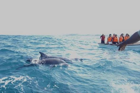 Kizidolphintours day tours: Dolphin tour. The tour doesn't only allow you to see the dolphins but also to swim with them