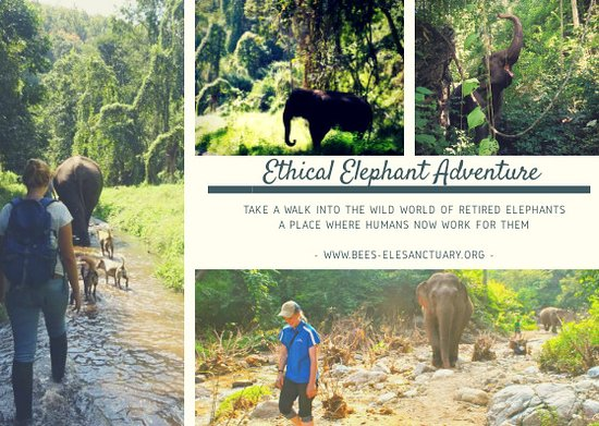Mae Chaem, Tayland: Ethical Elephant Adventure