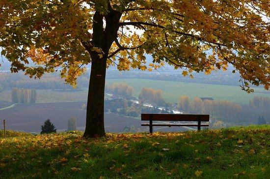 foto de Paysage d'automne - Picture of A l'Allure Champenoise, Reims ...