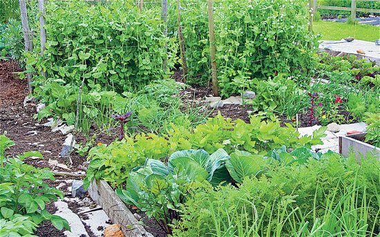 Swinton, UK: We aim to provide home grown seasonal fruit and vegetables to our guests
