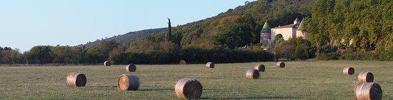Montmeyan, France: vue dès l'entrée dans le Domaine.