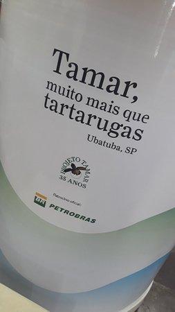 Projeto Tartarugas Marinhas (Tamar): 20180907_150708_large.jpg