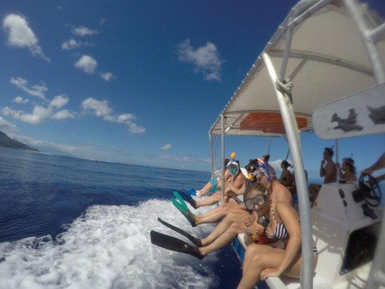 Haapiti, Polinezja Francuska: Go go go ! Moorea Deep Blue - whale / baleine / Moorea