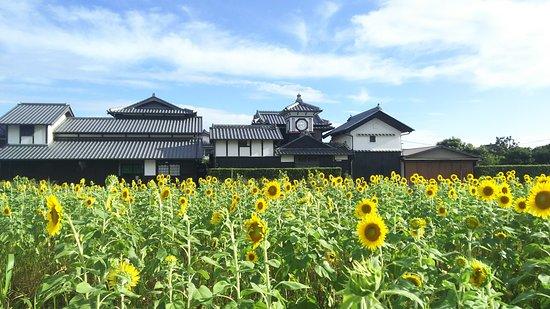 Aki, Giappone: 野良時計前に広がるヒマワリ畑と
