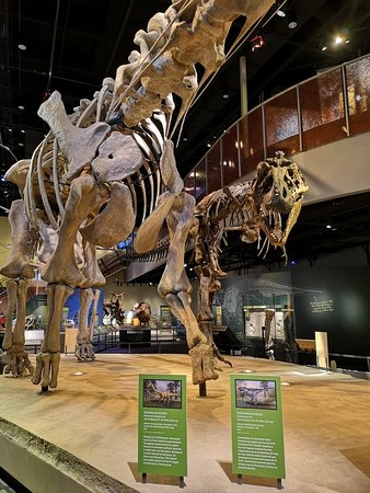 Perot Museum of Nature and Science: IMG_20180831_170531_large.jpg