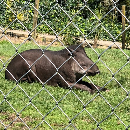 photo2 jpg - Picture of Hamilton Zoo, Hamilton - TripAdvisor