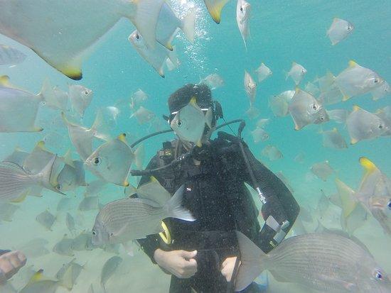Queensland Scuba Diving Company (Main Beach)