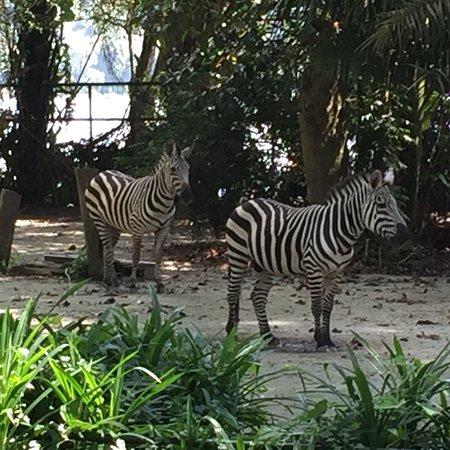Singapore Zoo: photo6.jpg