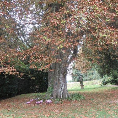 Hinton Ampner, UK: photo5.jpg