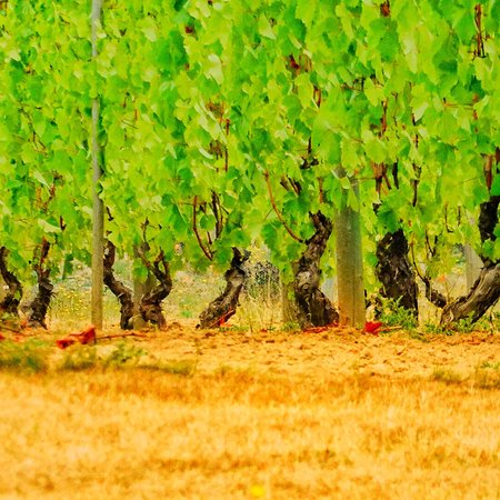 Cobble Hill, Canadá: Venturi-Schulze Vineyards