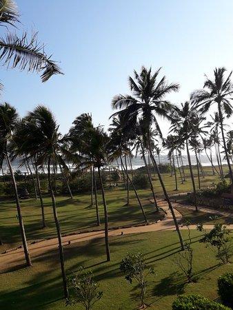A beauty on INDIAN ocean
