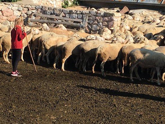 Galicnik, Mazedonien: The shepherd's trail