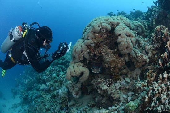 مركز غوص حديقة المرجان