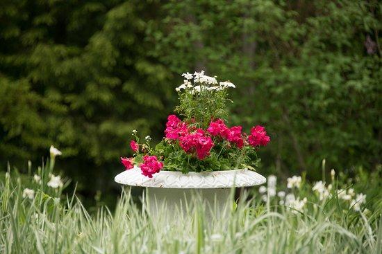 Mira Monte Inn: Back Garden