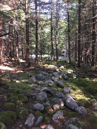 Somewhere along Long Pond Trail, Isle Au Haut, Acadia National Park