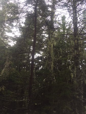 Isle Au Haut, ME: A moss covered tree along the Long Pond Trail.