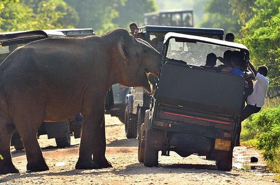 Safari privato in jeep nel Parco