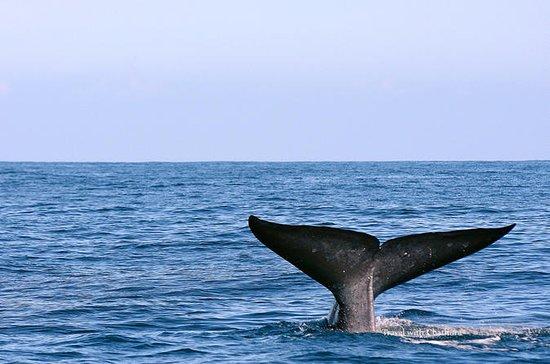 HikkaduwaからのMirissaのクジラウォッチングツアー