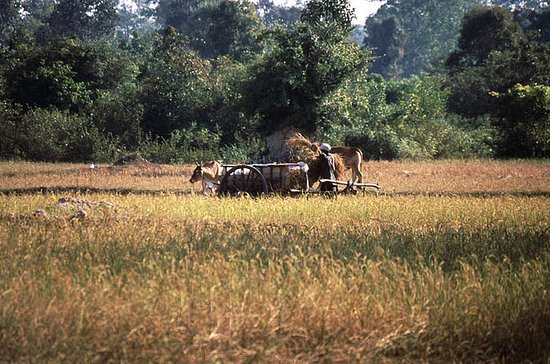 Siem Reap Countryside Tour and Cooking Class