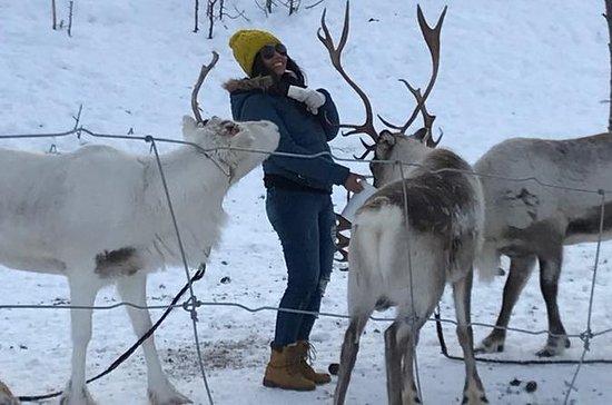 Renfoder i SamiCamp, Tromso