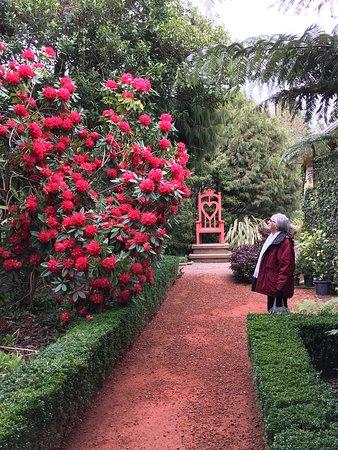 Larnach Castle & Gardens: Rhododendron