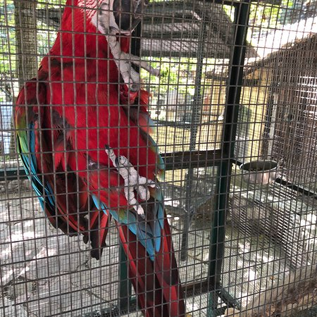 Zoologikos Kipos: Ζωολογικός Κήπος