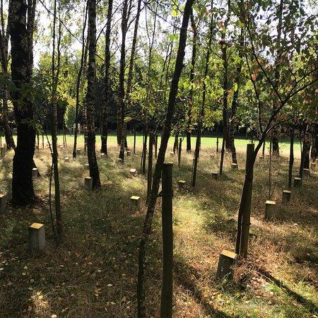 Bois de la Paix Photo