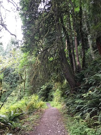 Carnation, วอชิงตัน: Forest Hike