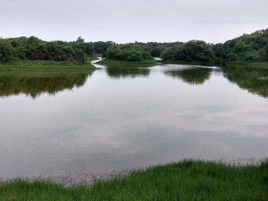 Adyar Poonga River Restoration Park
