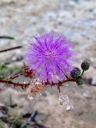 Fronteira: Flora local