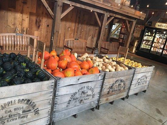 Poplar Grove, Илинойс: Squash and Pumpkins