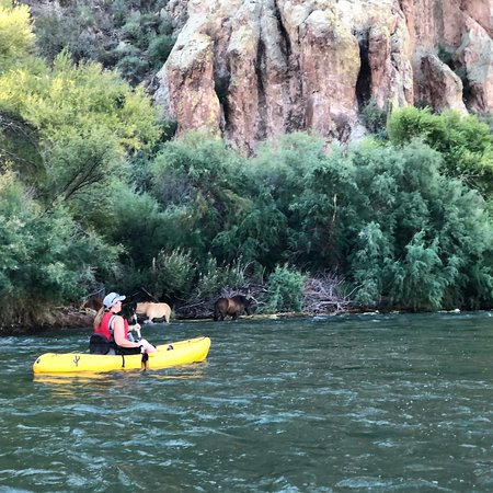 Randonnée en kayak à Salt River