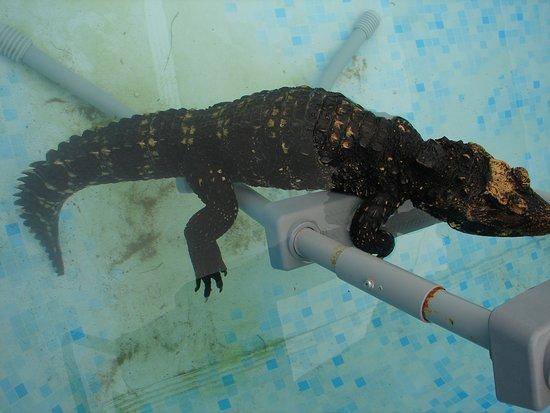 Crocs R Us