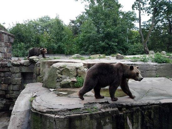 Калининградский зоопарк: Мишаня