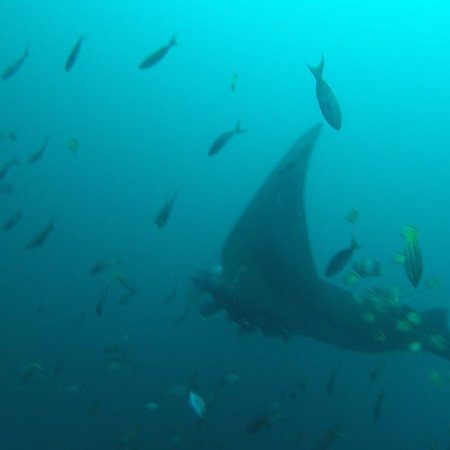 Mares Dive Center: photo4.jpg