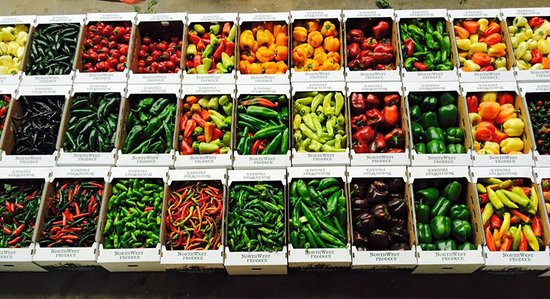 Rainbow of peppers - Picture of Krueger Pepper Gardens, Yakima ...
