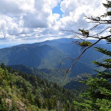 Mount LeConte: photo2.jpg