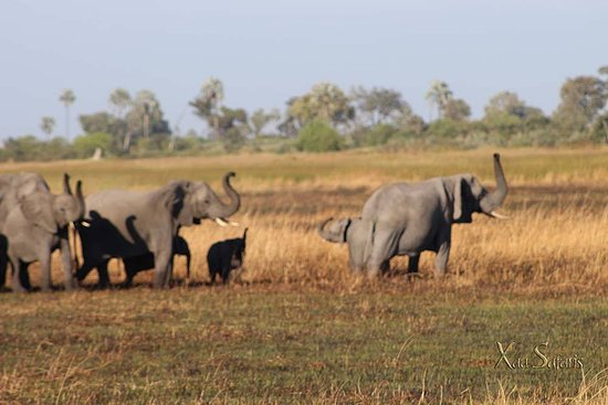 Maun, Botswana: Elephants in the delta