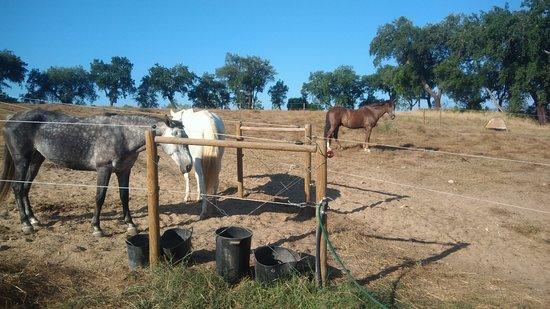 Pego, Portugal: Centro equestre.