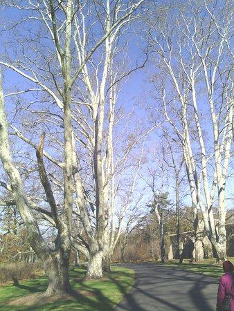 Hillsborough, NJ: Avenue of stately trees