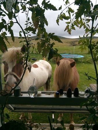 Reykholt, Islandia: 😃