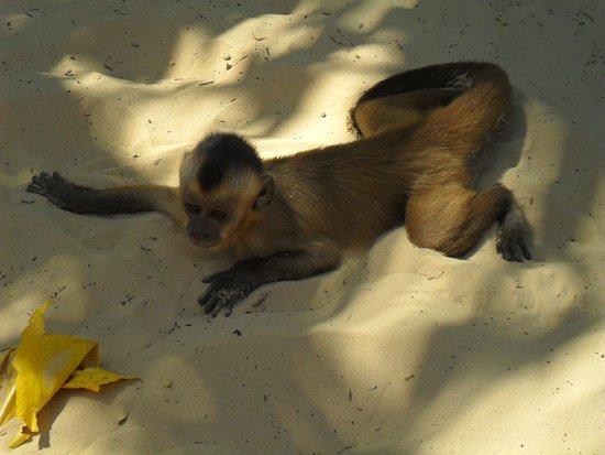 Rio Preguiças: Macacos