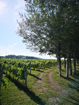 Vignoble Carpinteri, Villa Carpinteri: IMG_20180902_155153_large.jpg